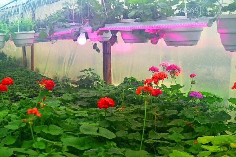 В теплицах черноморского «Зеленхоза» бушует весна , фото-2