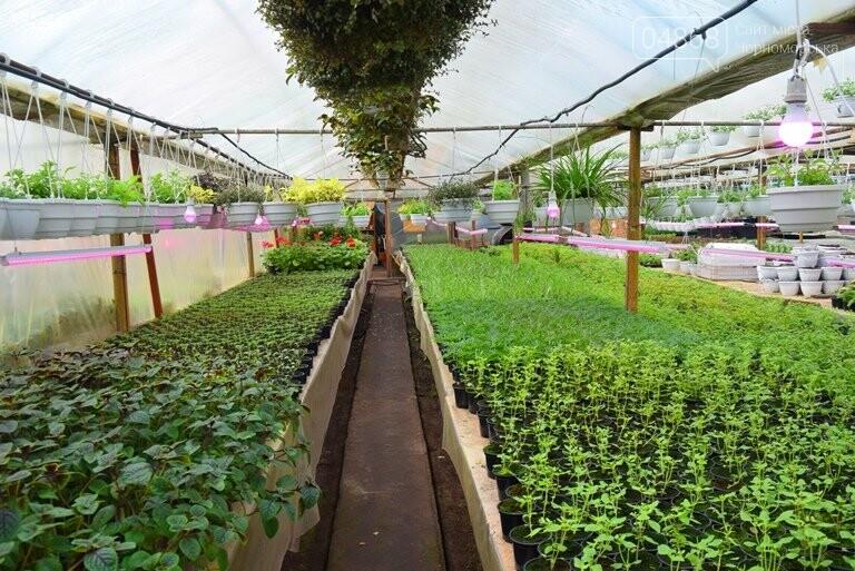 В теплицах черноморского «Зеленхоза» бушует весна , фото-20