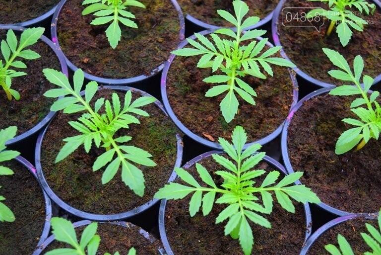 В теплицах черноморского «Зеленхоза» бушует весна , фото-4