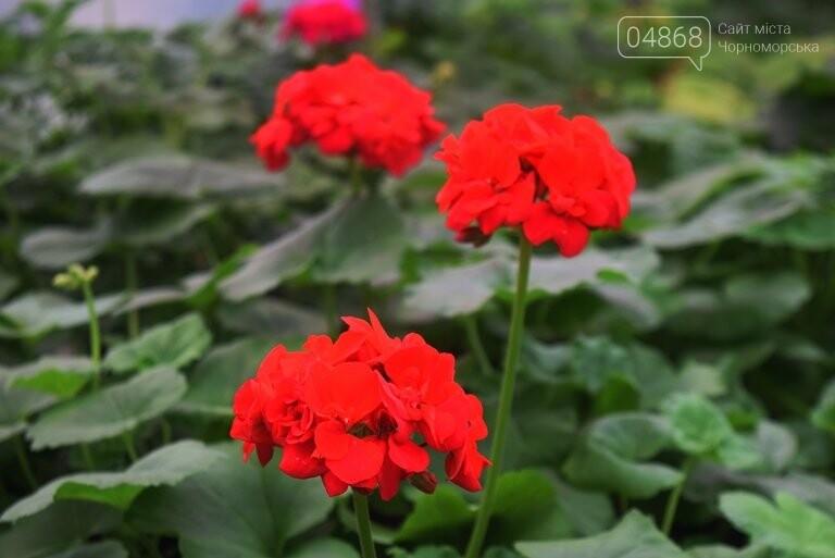 В теплицах черноморского «Зеленхоза» бушует весна , фото-24