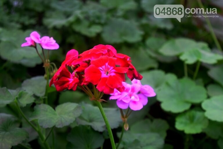 В теплицах черноморского «Зеленхоза» бушует весна , фото-25