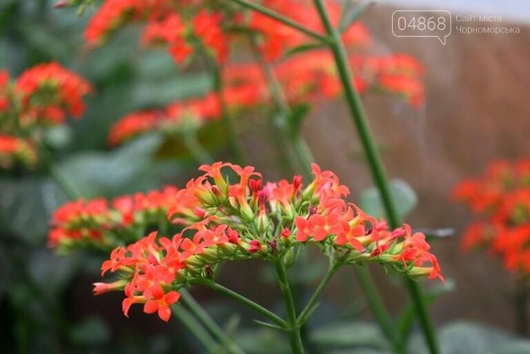 В теплицах черноморского «Зеленхоза» бушует весна , фото-5
