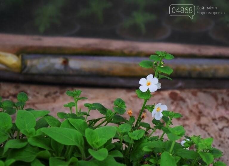 В теплицах черноморского «Зеленхоза» бушует весна , фото-28