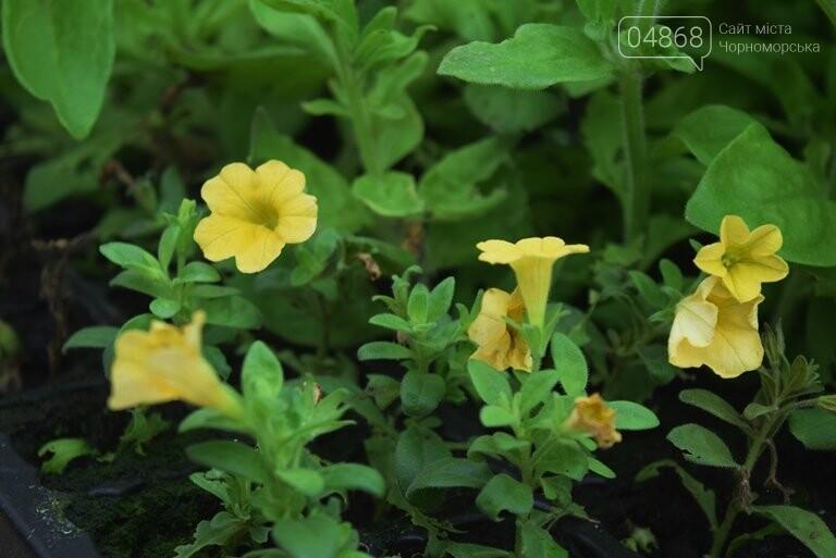 В теплицах черноморского «Зеленхоза» бушует весна , фото-30