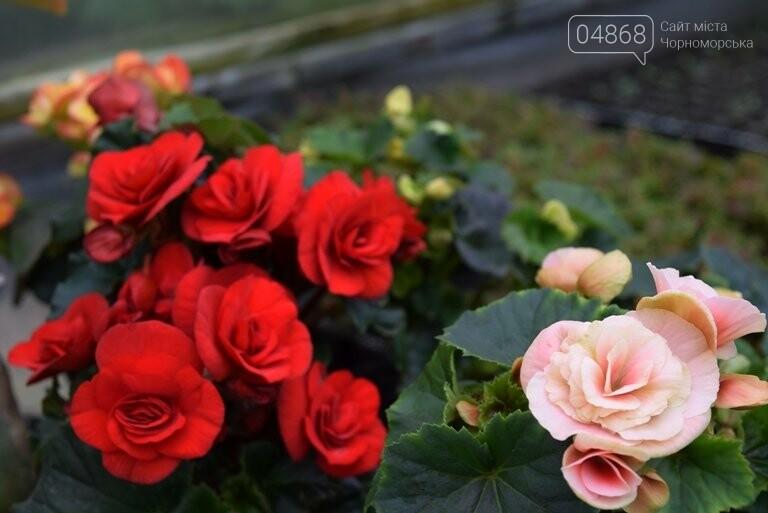 В теплицах черноморского «Зеленхоза» бушует весна , фото-31