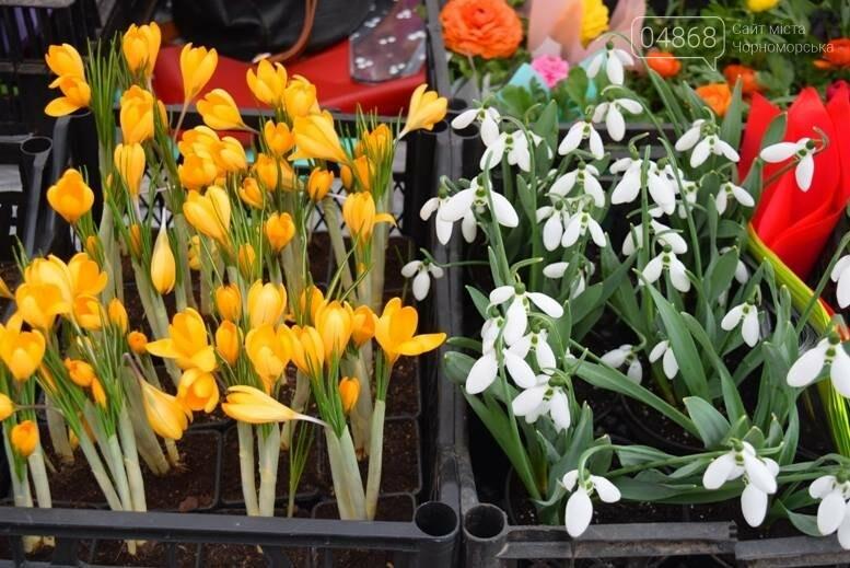 В Черноморске открылась весенняя цветочная ярмарка, фото-1