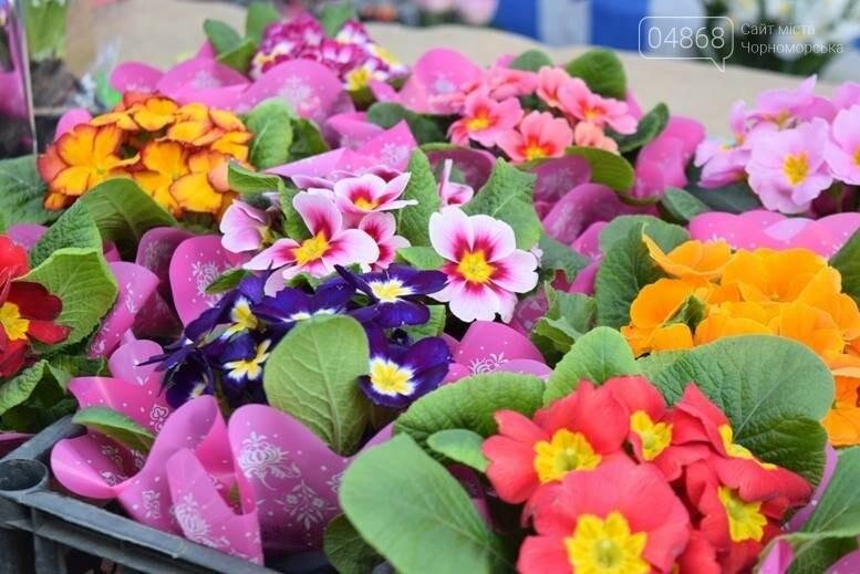 В Черноморске открылась весенняя цветочная ярмарка, фото-18