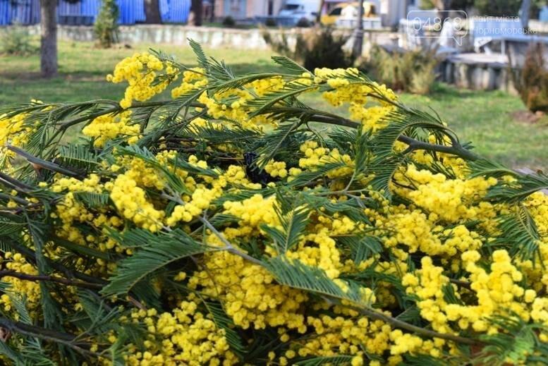 В Черноморске открылась весенняя цветочная ярмарка, фото-9