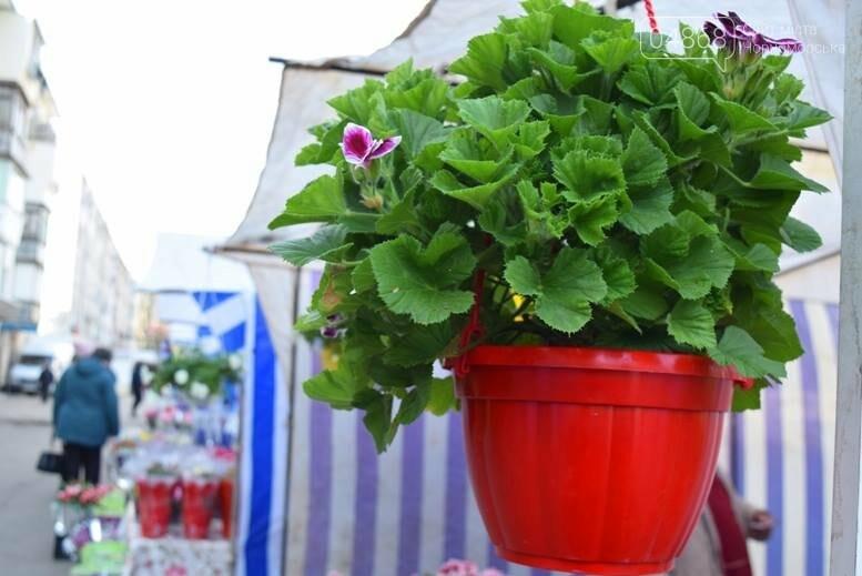 В Черноморске открылась весенняя цветочная ярмарка, фото-4