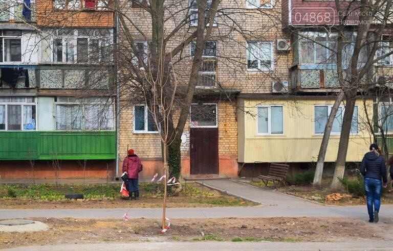 В Черноморске появится более 100 красавиц-катальп, фото-7