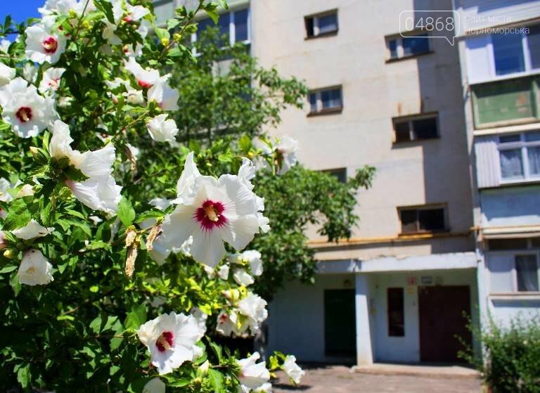 Жителей Черноморска приглашают принять участие в конкурсе на лучший подъезд, фото-3