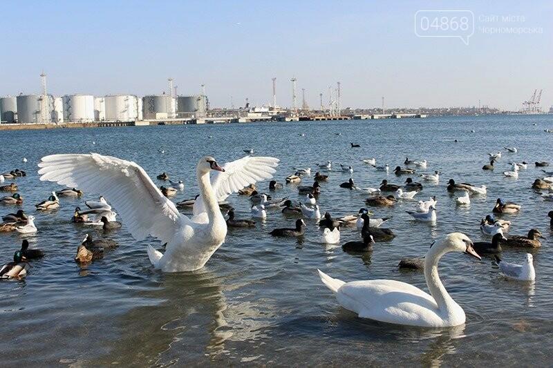 В Черноморске заработает инновационная система мониторинга загрязнения акватории порта, фото-8