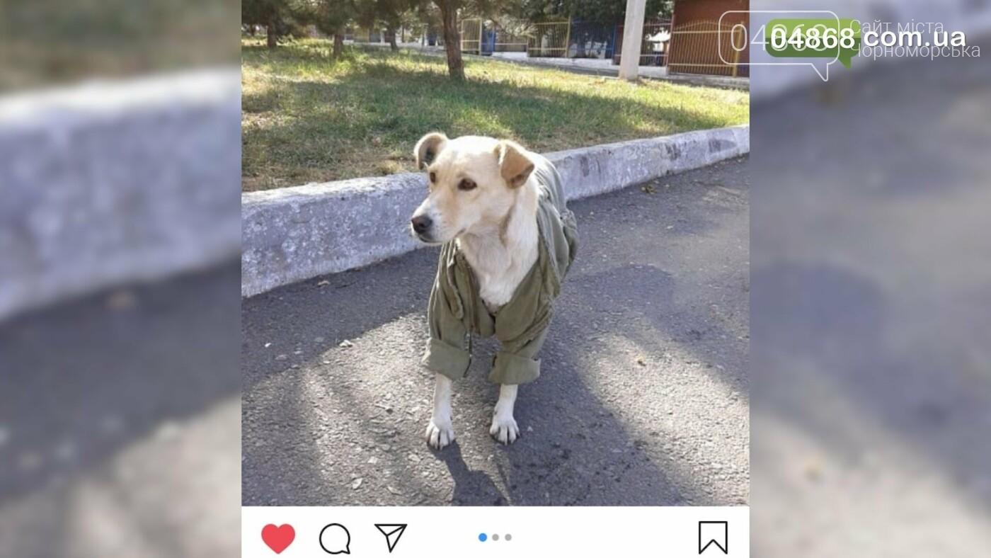 Нечеловеческая жестокость: в Черноморске убили собаку прямо на детской площадке (подробности) , фото-1