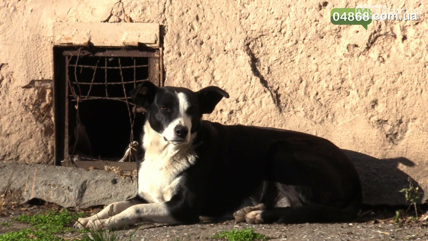 Нечеловеческая жестокость: в Черноморске убили собаку прямо на детской площадке (подробности) , фото-2