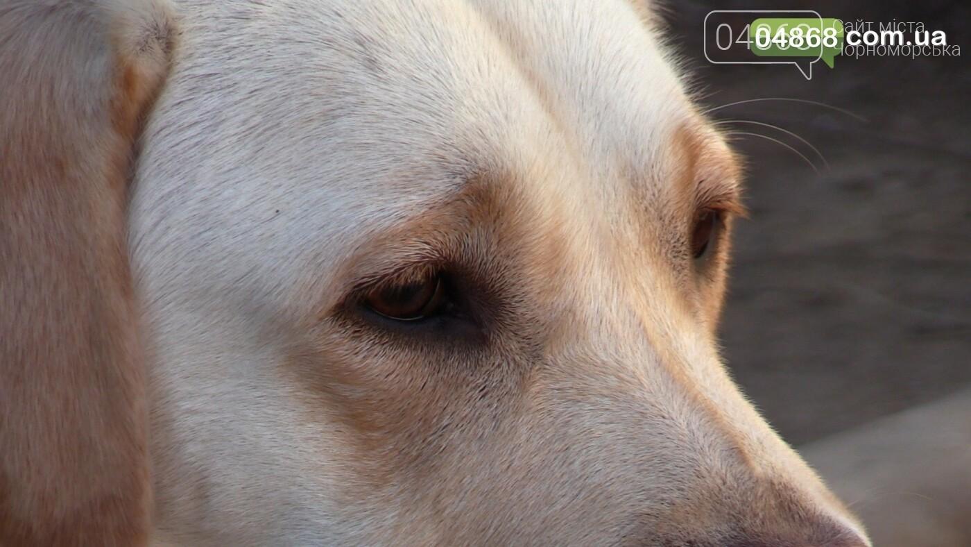 Нечеловеческая жестокость: в Черноморске убили собаку прямо на детской площадке (подробности) , фото-3
