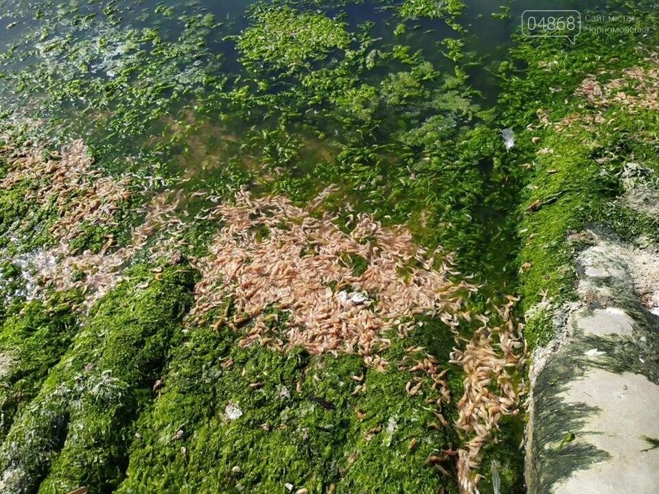 Массовый мор: на Хаджибейском лимане погибло полтонны рыбы и креветок, фото-2