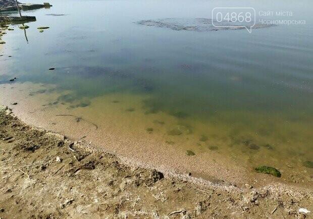 Массовый мор: на Хаджибейском лимане погибло полтонны рыбы и креветок, фото-3