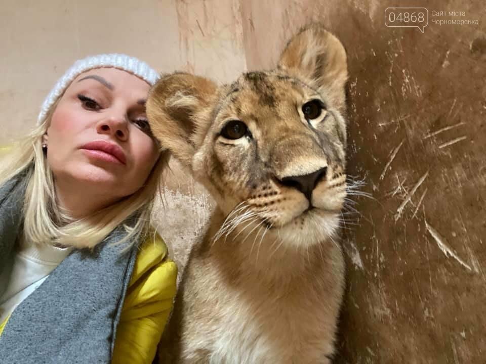 Знаменитый львёнок из одесского ночного клуба поедет домой в Африку , фото-2