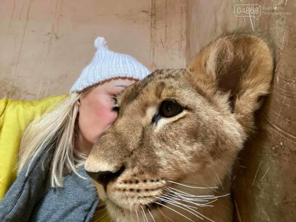 Знаменитый львёнок из одесского ночного клуба поедет домой в Африку , фото-4