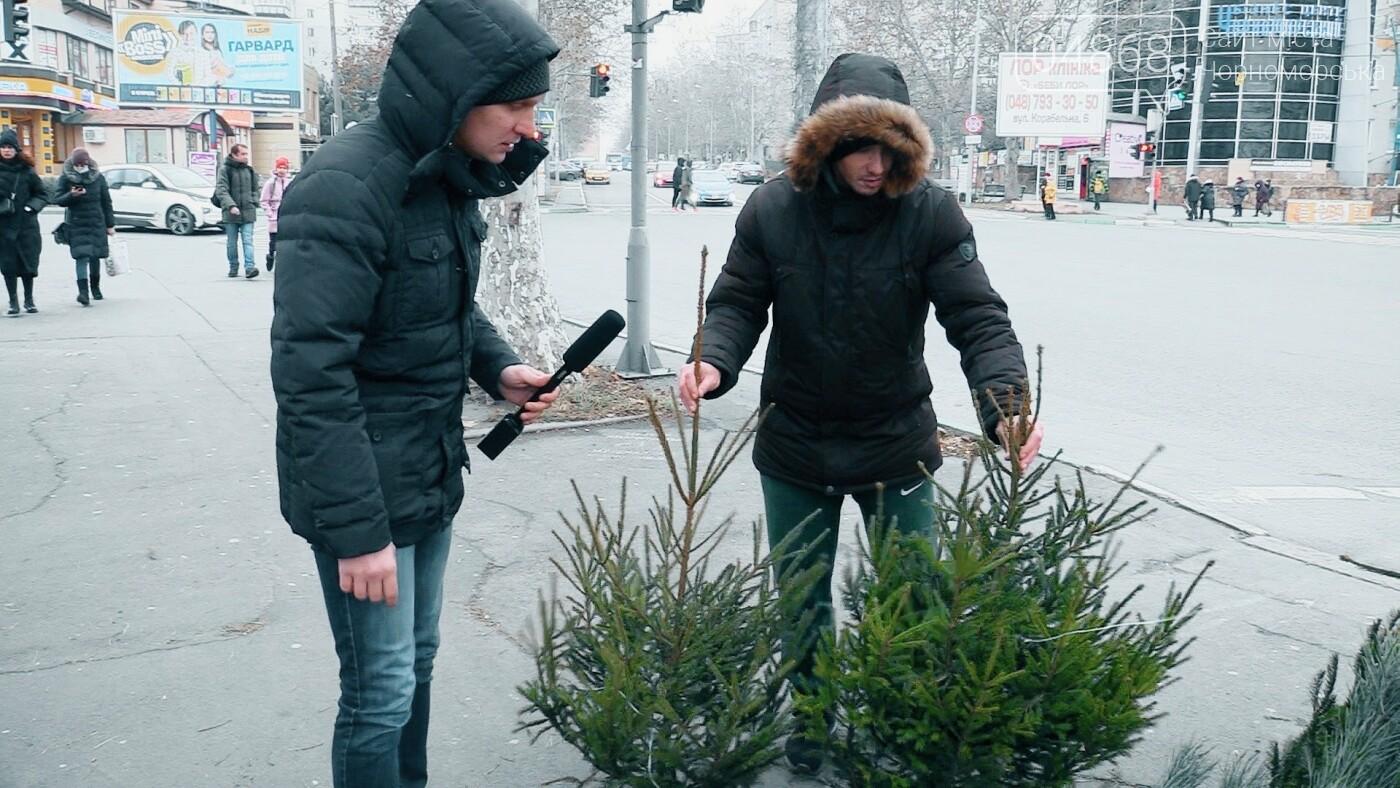 В Черноморске появились первые точки продажи ёлок (видео), фото-2