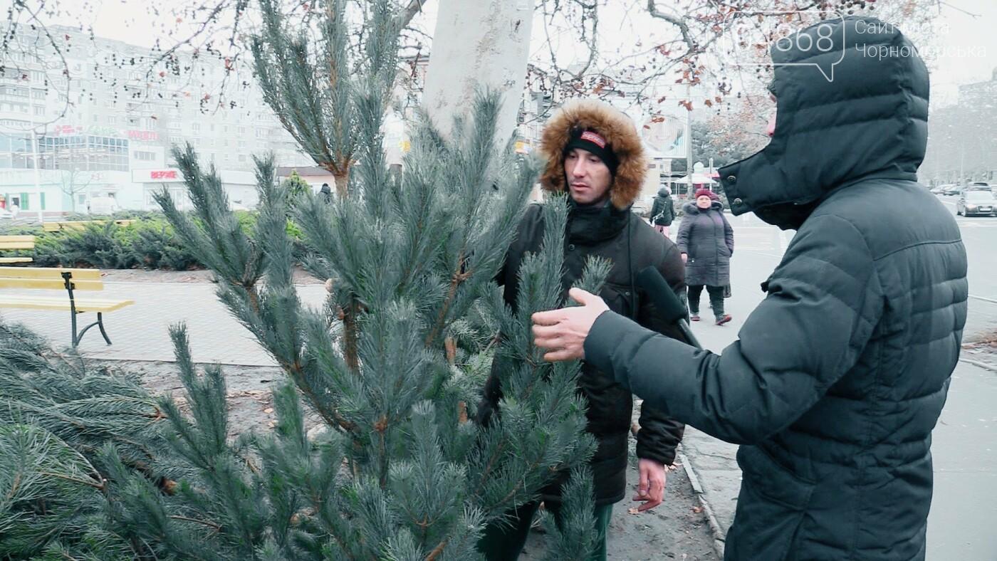 В Черноморске появились первые точки продажи ёлок (видео), фото-6