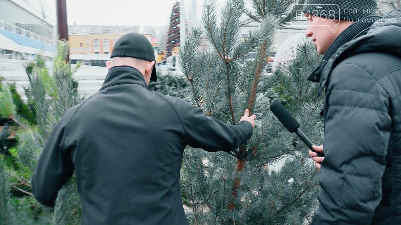 В Черноморске появились первые точки продажи ёлок (видео), фото-8