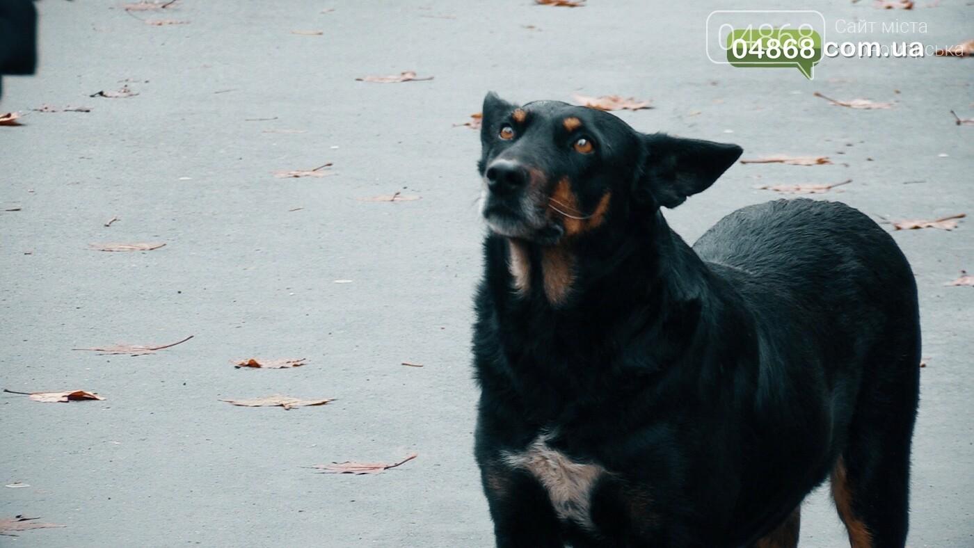 Бездомные животные Черноморска: как решить проблему (видео), фото-3