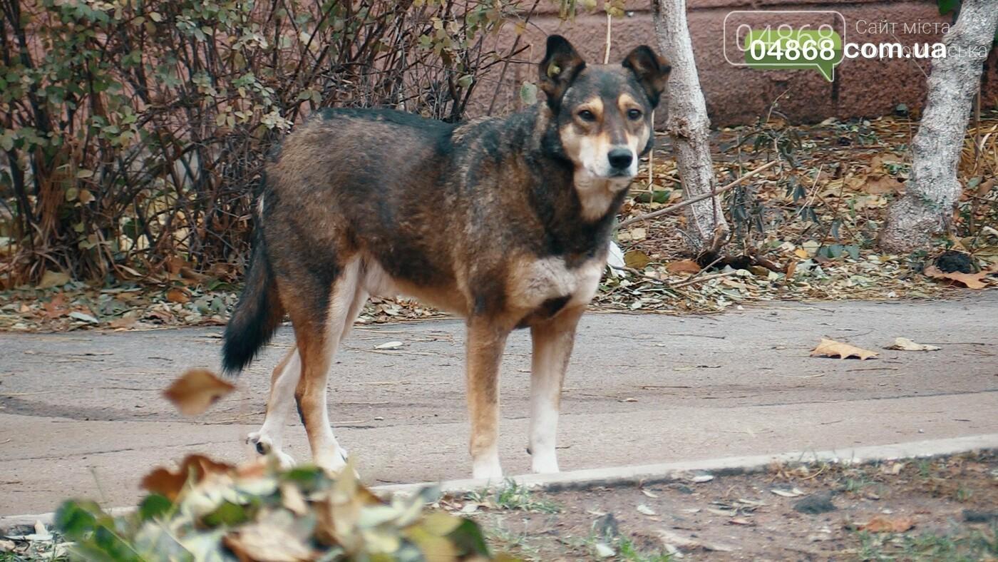 Бездомные животные Черноморска: как решить проблему (видео), фото-2