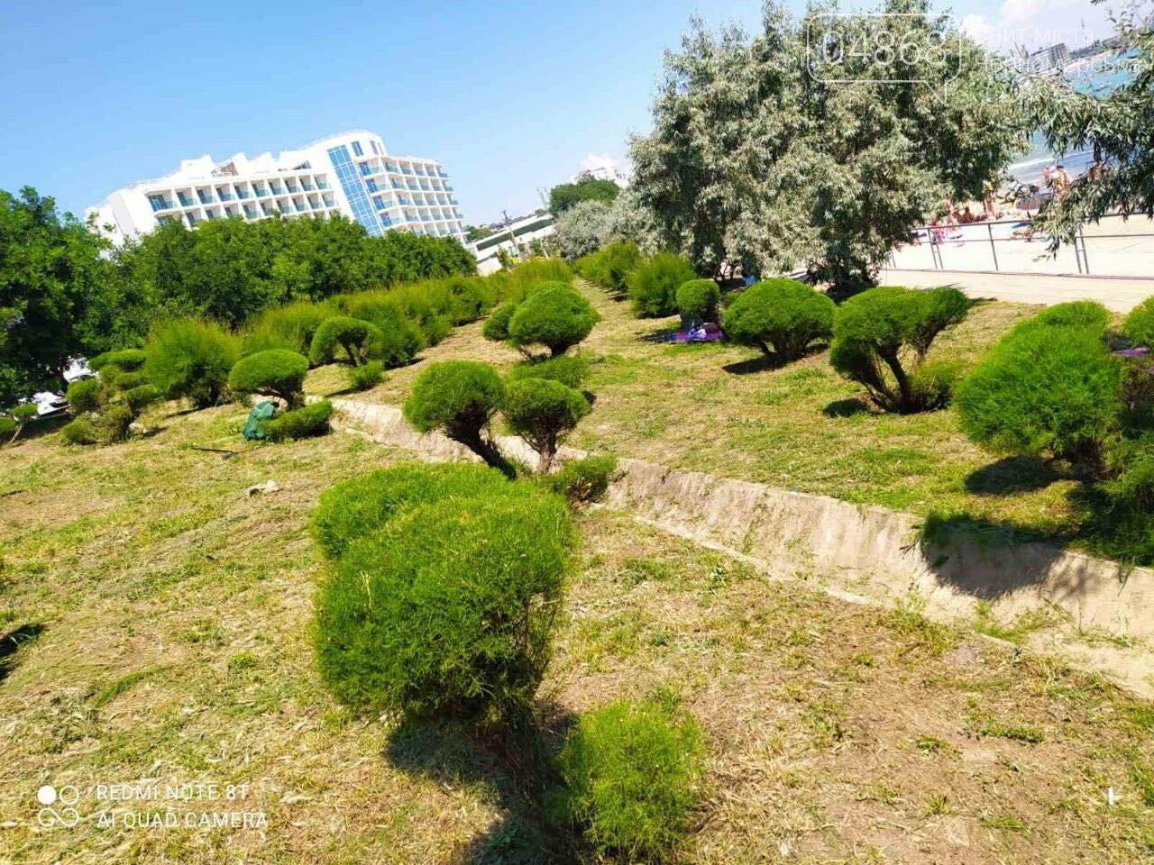 В Черноморске «Зеленхоз» проводит обрезку декоративных кустов, фото-8