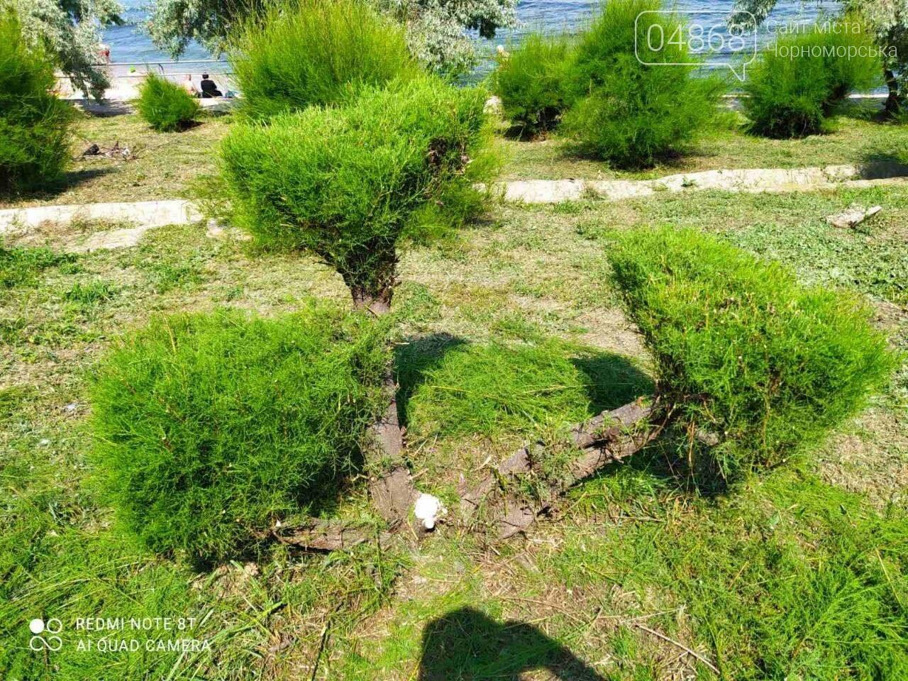 В Черноморске «Зеленхоз» проводит обрезку декоративных кустов, фото-10