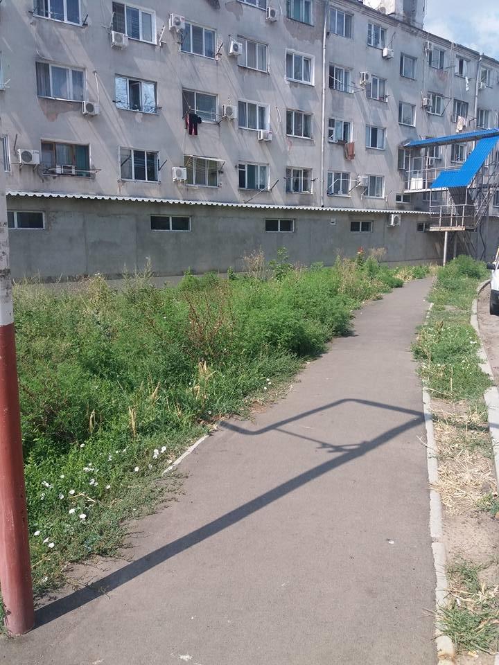 «Стоп амброзия»: новости с зелёных фронтов Черноморска, фото-2