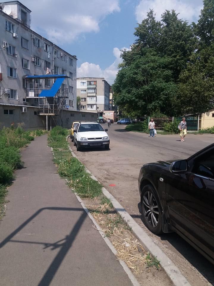 «Стоп амброзия»: новости с зелёных фронтов Черноморска, фото-1