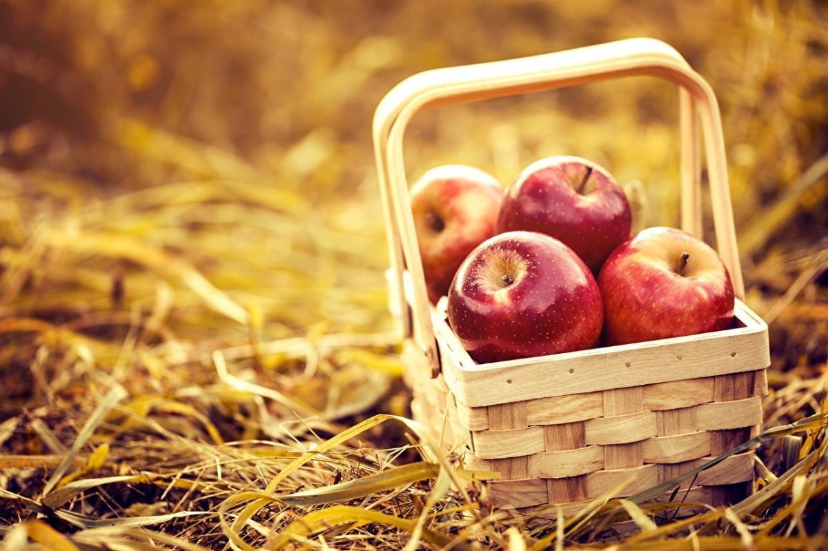Лето переходит в осень: с Яблочным Спасом, Черноморск!, фото-4