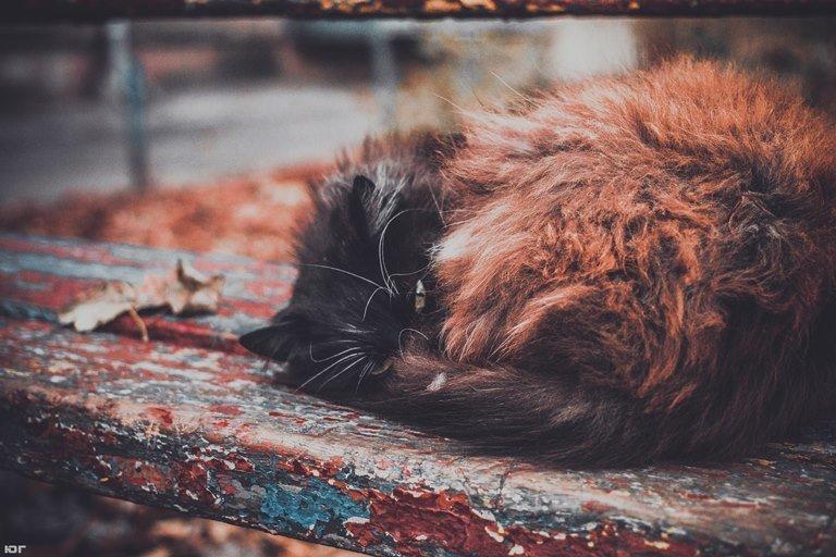 «Мой пушистый друг»: в Черноморске пройдёт фотоконкурс, посвящённый... котам!, фото-3