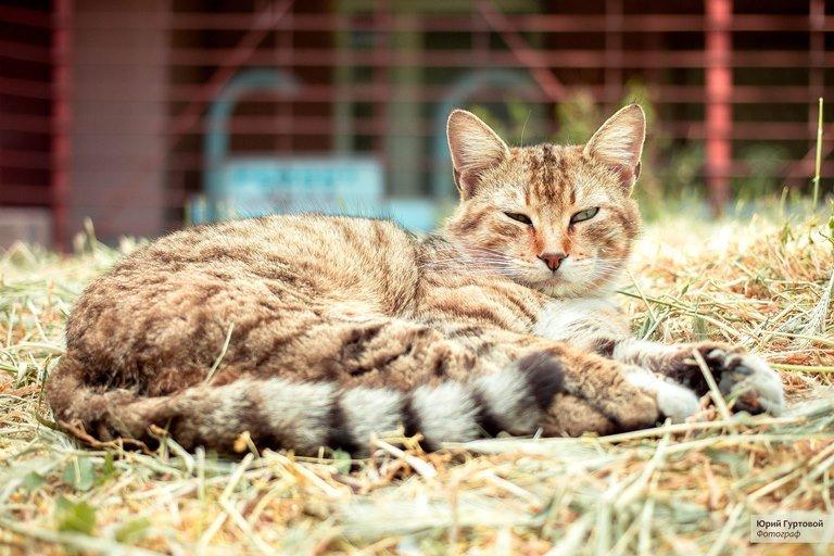 «Мой пушистый друг»: в Черноморске пройдёт фотоконкурс, посвящённый... котам!, фото-5