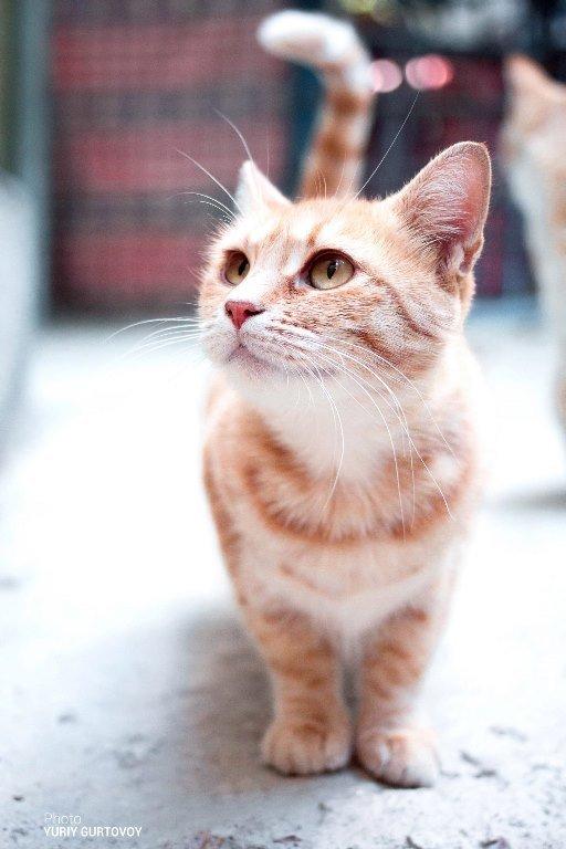 «Мой пушистый друг»: в Черноморске пройдёт фотоконкурс, посвящённый... котам!, фото-4