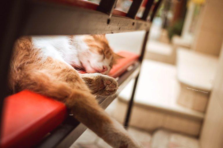 «Мой пушистый друг»: в Черноморске пройдёт фотоконкурс, посвящённый... котам!, фото-1