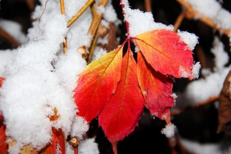 С первым снегом, Черноморск!, фото-4