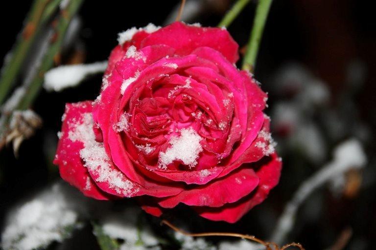 С первым снегом, Черноморск!, фото-13