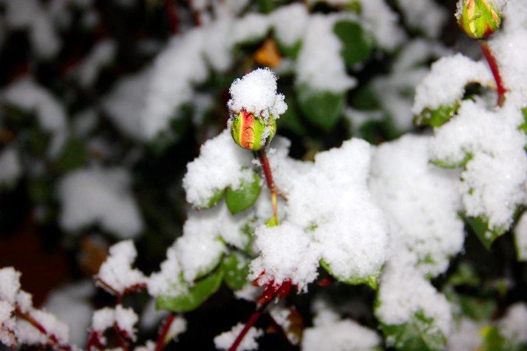 С первым снегом, Черноморск!, фото-18