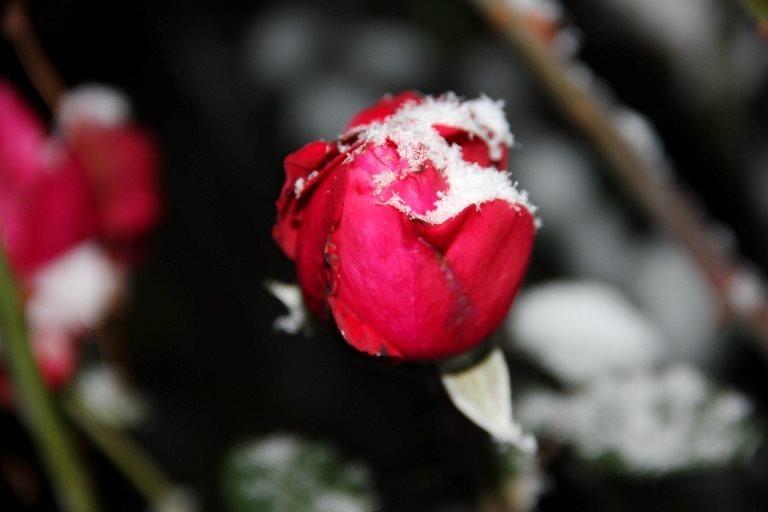С первым снегом, Черноморск!, фото-20