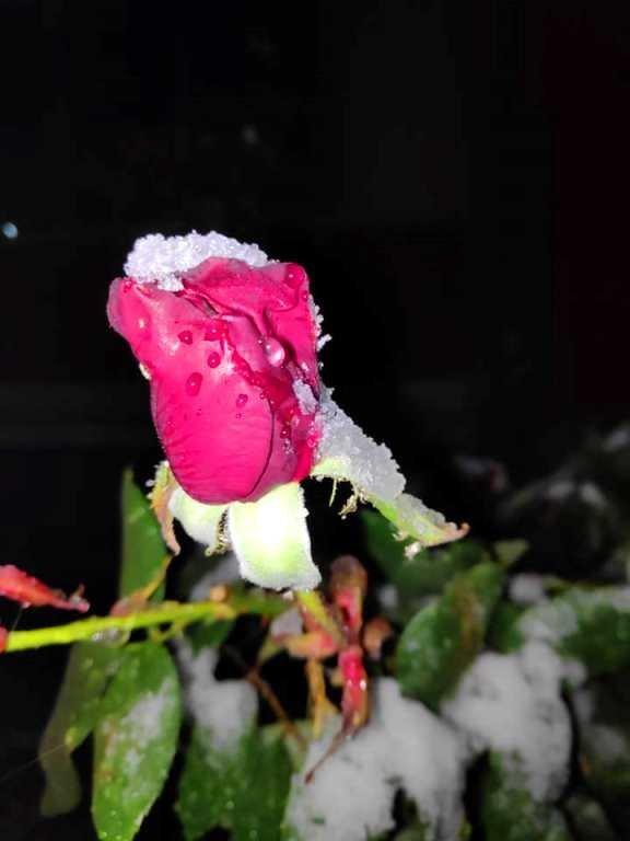 С первым снегом, Черноморск!, фото-23