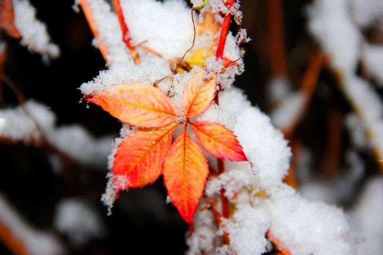 С первым снегом, Черноморск!, фото-25