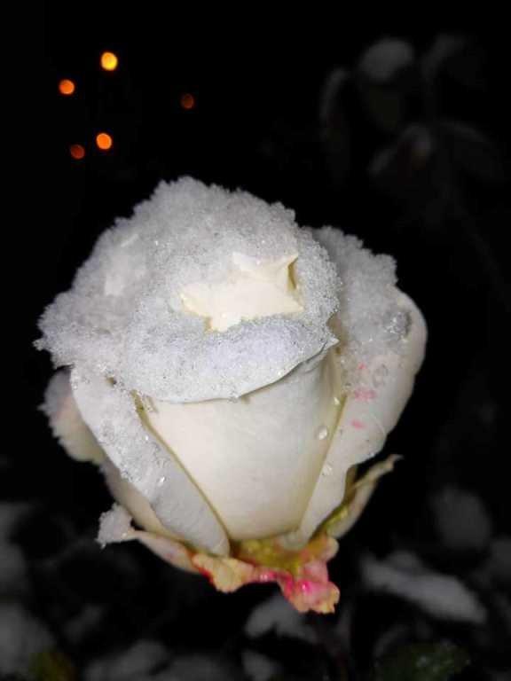 С первым снегом, Черноморск!, фото-30