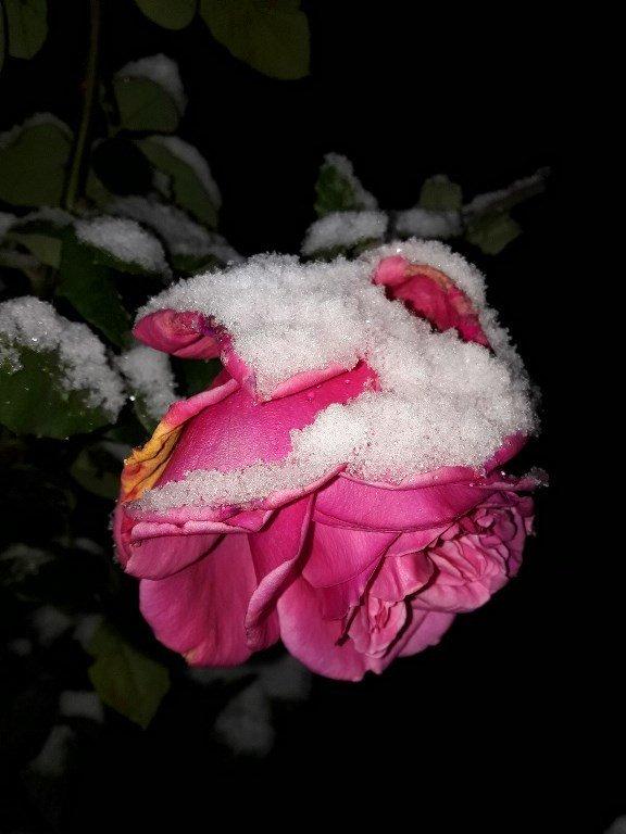 С первым снегом, Черноморск!, фото-11