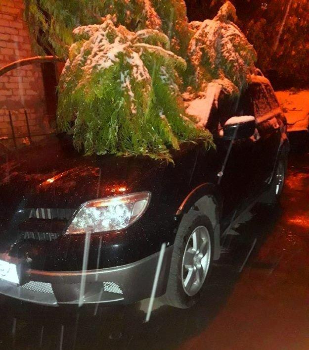 С первым снегом, Черноморск!, фото-35