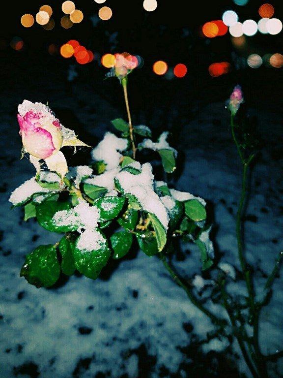 С первым снегом, Черноморск!, фото-3