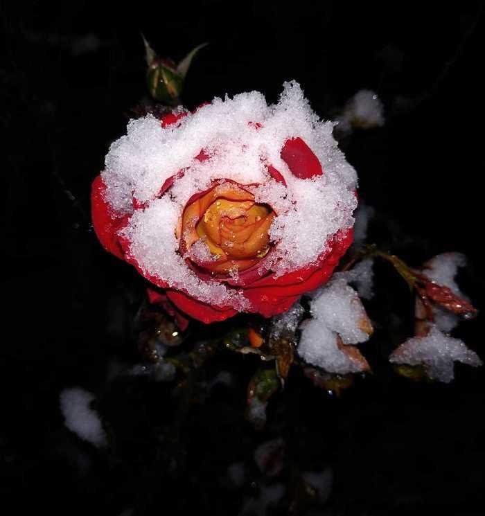С первым снегом, Черноморск!, фото-36