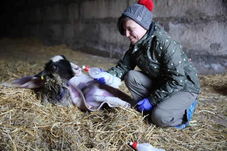 Спасенные в Черноморске овцы получили новый дом под Одессой, фото-3