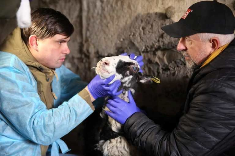 Спасенные в Черноморске овцы получили новый дом под Одессой, фото-2